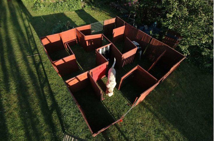 Backyard Maze toy