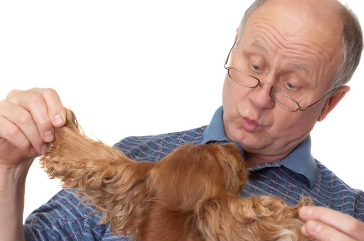 Bald senior man with dog.
