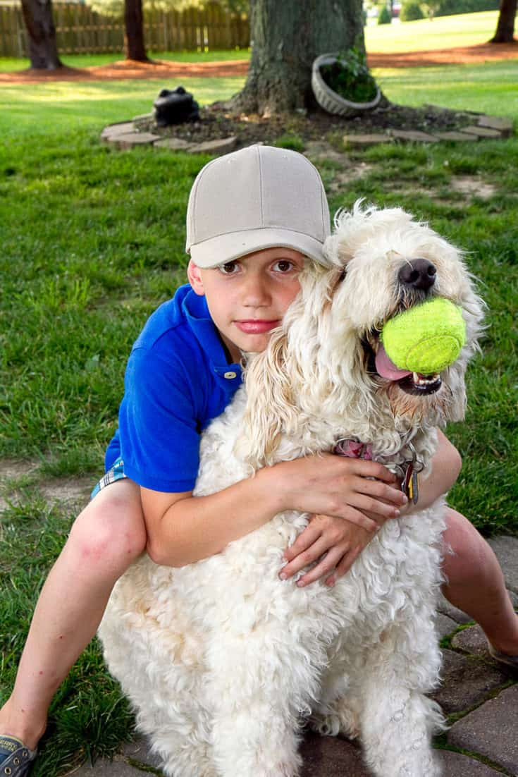 Young boy being playful and loving on his large white dog