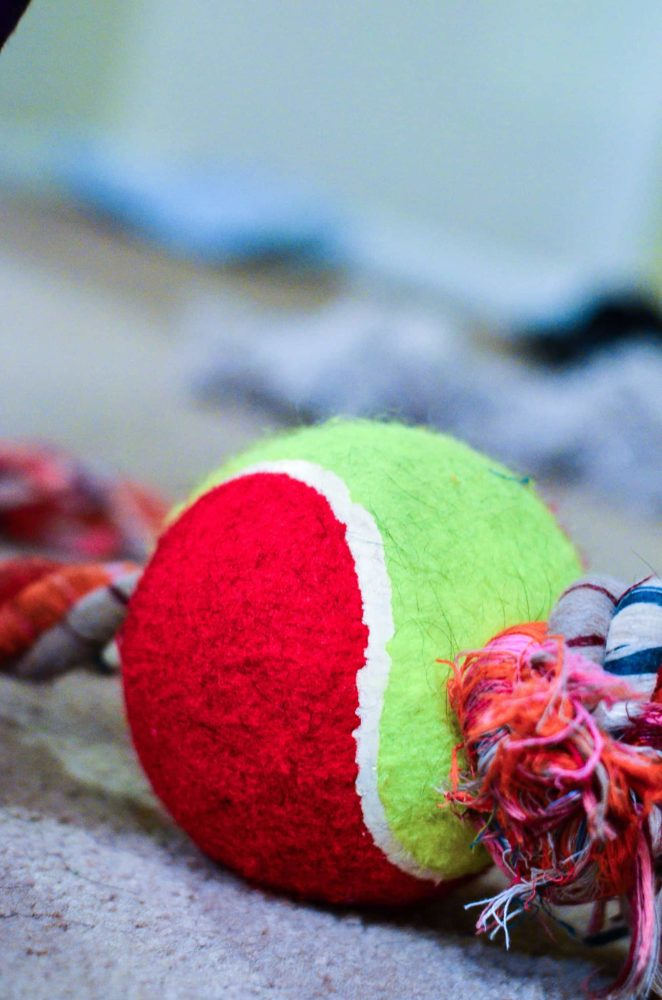 DIY Tennis Ball and Rope Dog Toy