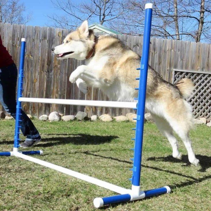Dog Agility Jump