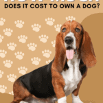 How Much Does it Cost to Own a Dog? - pin