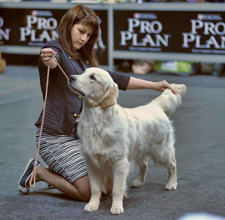 Woman and dog in show.