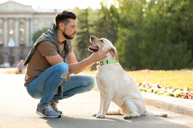 Man training a guide dog