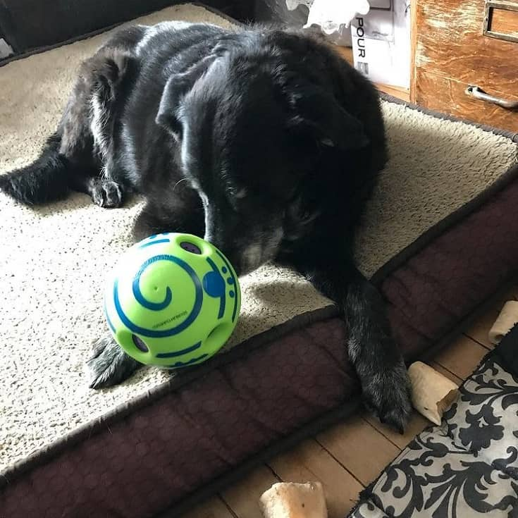 Special toys for blind dogs