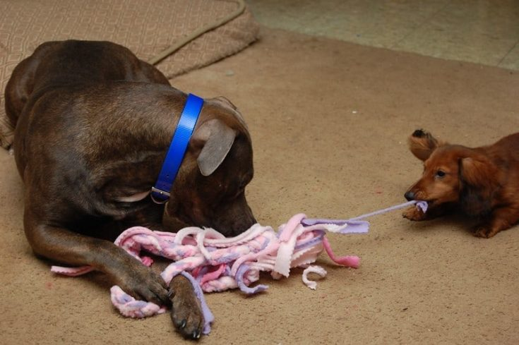 pink and purple-ness of the homemade tug toy