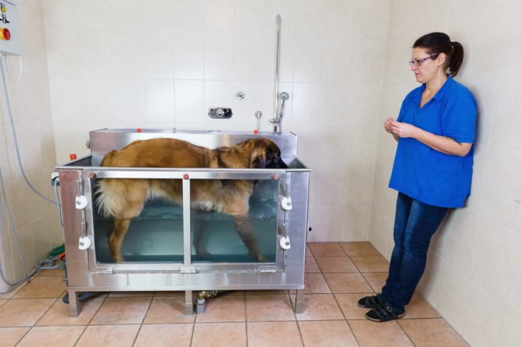 picture of a woman who works with a Leonberger dog at a hydrotherapy station
