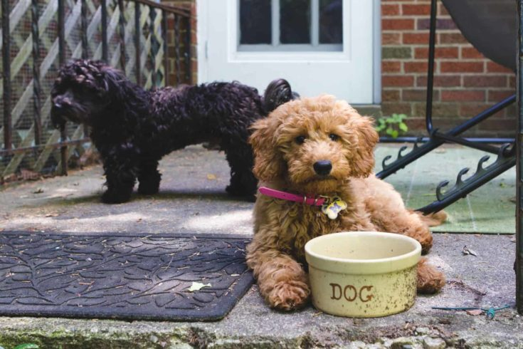 Two puppy friends hanging out outside near a water bowl.