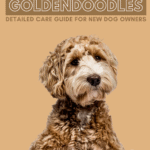 Adorable Goldendoodles: Detailed Care Guide for New Dog Owners - Pin