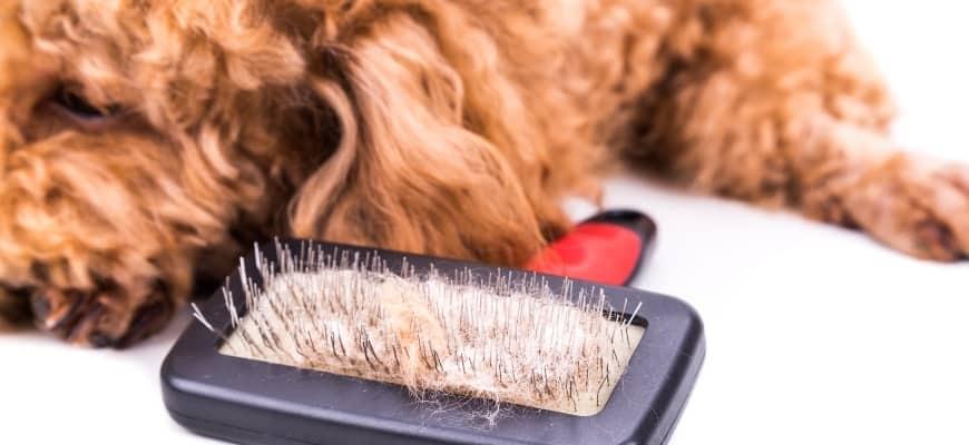Slick brush with tangled dog's hair.