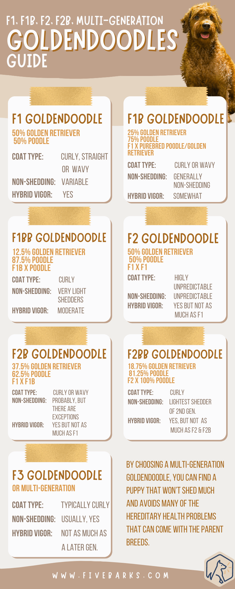 F1, F1B, F2, F2B, Multi-Generation Goldendoodles Guide - Infographic