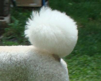 Pom pom tail hair cut