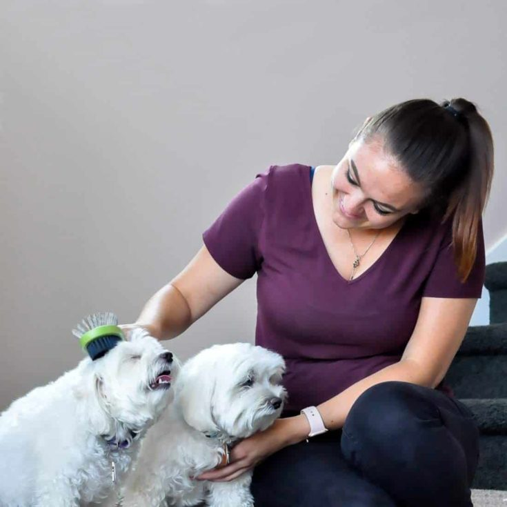 Woman combing her two dogs