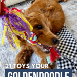 21 Toys Your Goldendoodle Will Go Bonkers For! - Pin