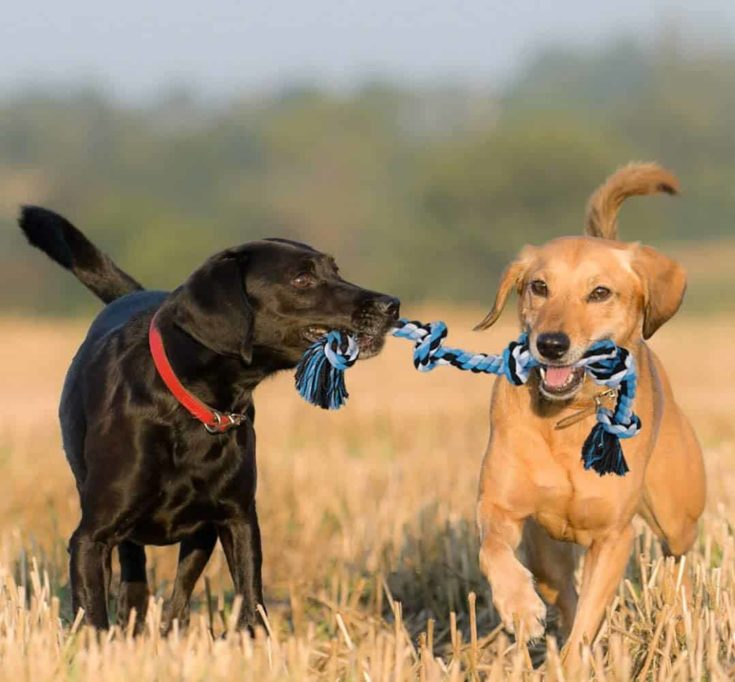 BMAG Dog Rope Toys for Aggressive Chewers