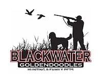Blackwaterdoodles logo