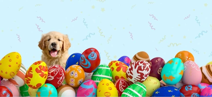 colorful easter eggs with golden puppy at the back