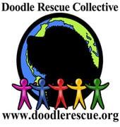 Doodle Rescue Collective, Inc. Labradoodle & Goldendoodle Rescue logo