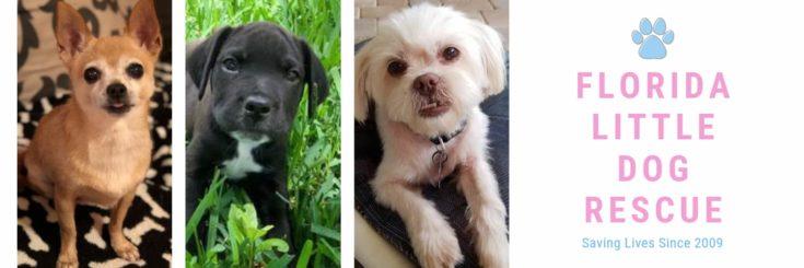 Florida Little Dog Rescue logo