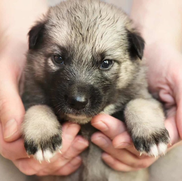 Little puppy give in good hands.Dog searching for hosts.Help a homeless pet.