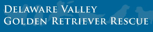 Delaware Valley Golden Retriever Rescue logo