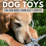 3 Easy Dog Toys You Can Make from Old T-Shirts! - pin