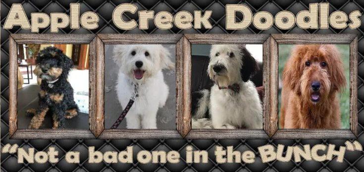 Apple Creek Doodles