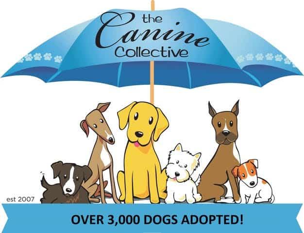 Canine Collective Ohio Dog Rescue logo