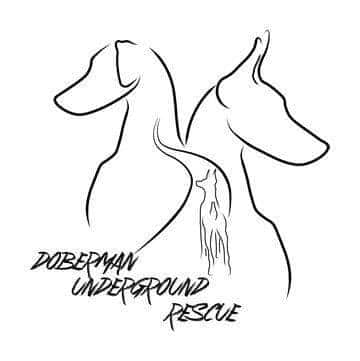 Doberman Underground Rescue in Ohio logo