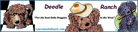 Doodle Ranch banner