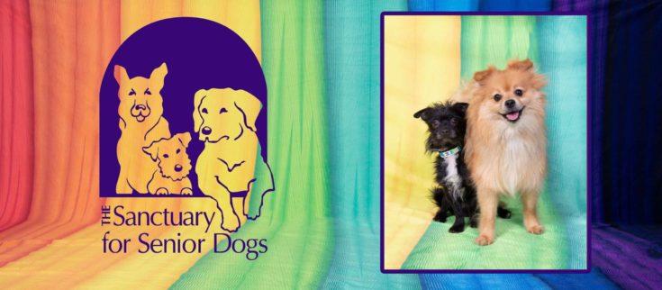 Sanctuary For Senior Dogs Ohio logo