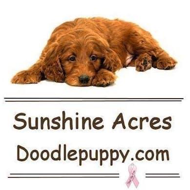 Sunshine Acres Goldendoodles logo
