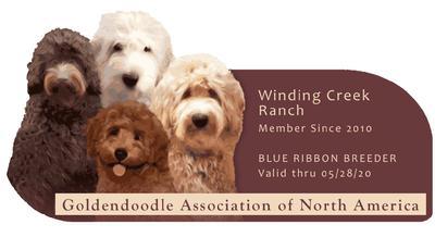 Winding Creek Ranch Goldendoodles