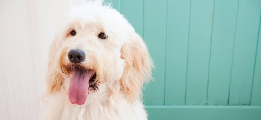 Dog in wooden background