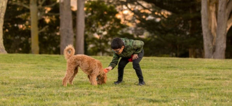 Boy Training Goldendoodle at Park