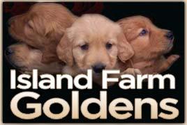 Island Farm Goldens logo