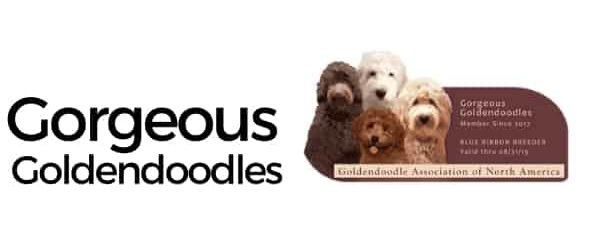 Gorgeous Goldendoodles logo
