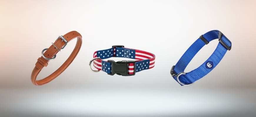 Best Collar For Goldendoodle