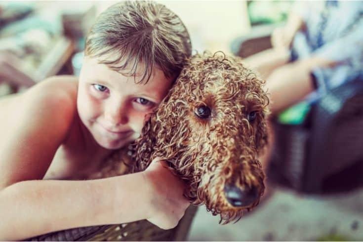 Boy with goddledoodle dog