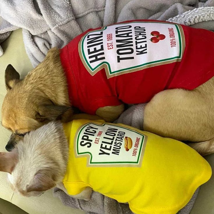 Condiments Shirts For Pet Dogs Cats