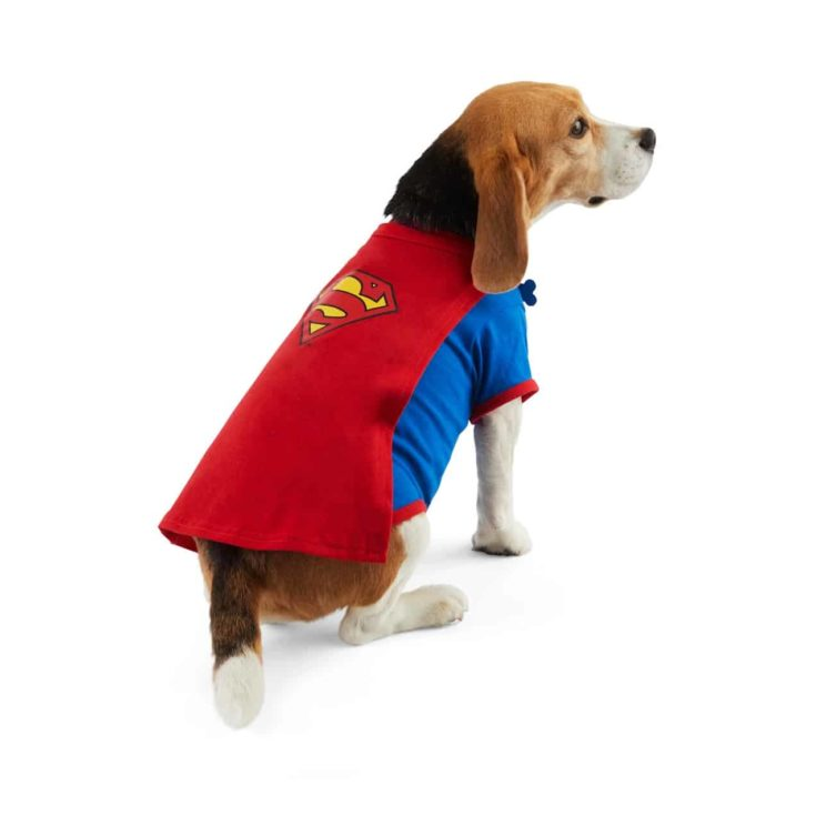 a dog wearing DC Comics Justice League Superman Pet T-Shirt With Removable Cape