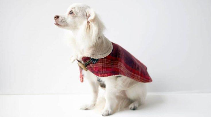 Red checkered Dog Coat
