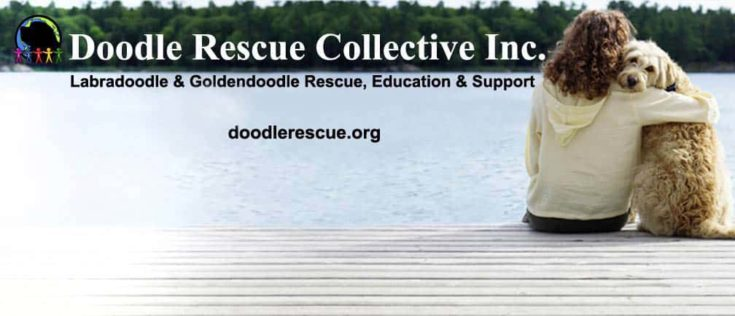 Doodle Rescue Collective Inc. banner