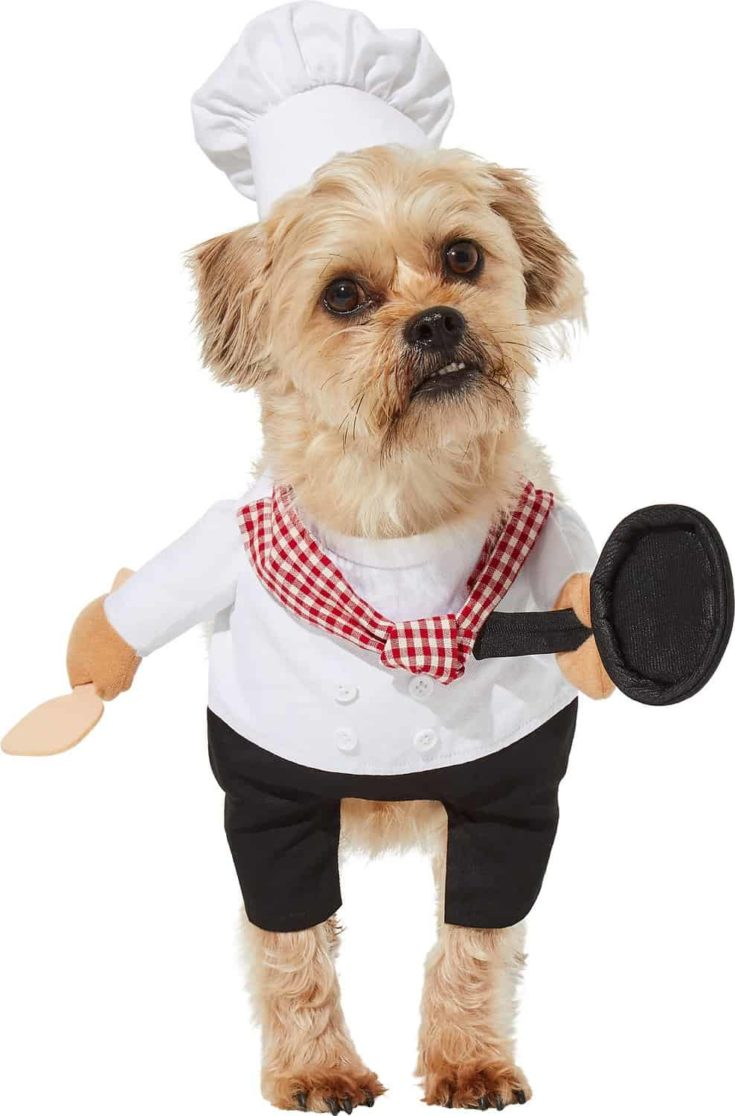 Frisco Front Walking Chef Dog & Cat Costume
