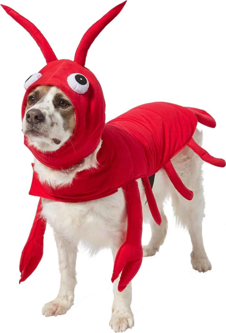 Frisco Red Lobster Dog & Cat Costume