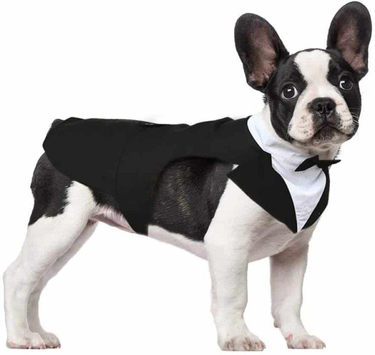 Kuoser Dog Tuxedo Dog Suit and Bandana Set