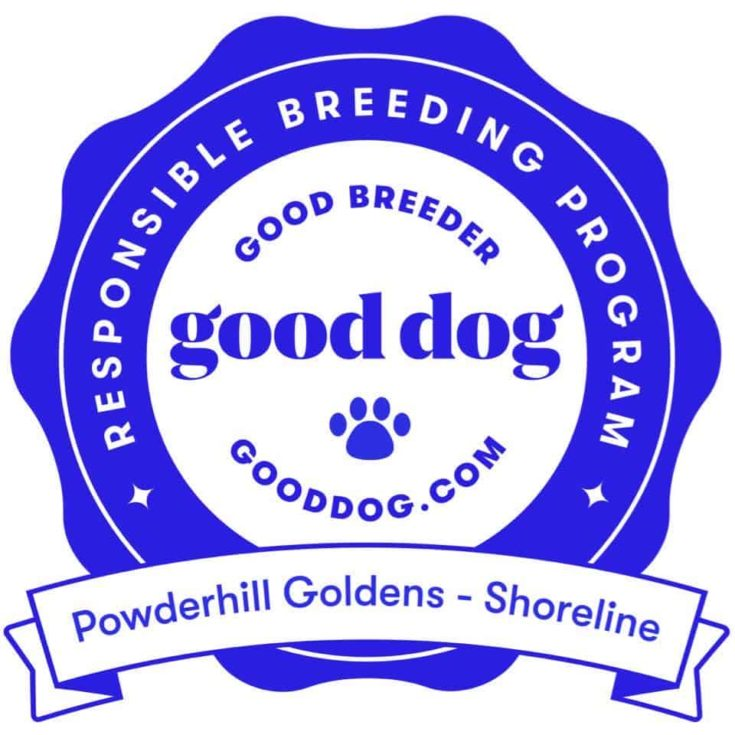 Powderhill Goldens - Shoreline