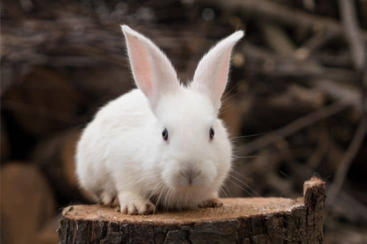Rabbit on top of a wooden log