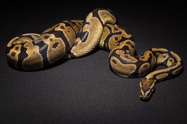 A snake on the floor