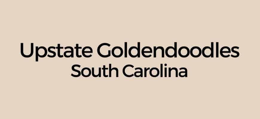 Upstate Goldendoodles South Carolina Logo